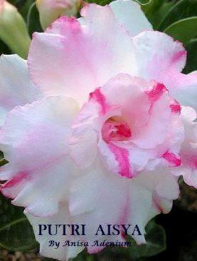 Putri Aisya