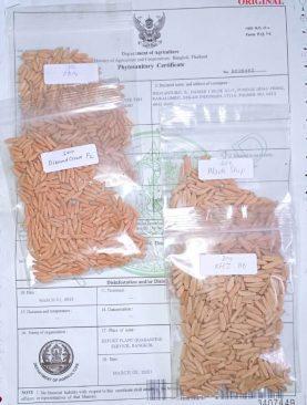 Seeds/Biji Adenium Karakter (Arabicum, Thaisoco, mixed hybrid, dll) Lokal & Import